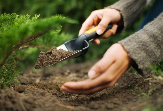 Nowe życie dla Twoich roślin